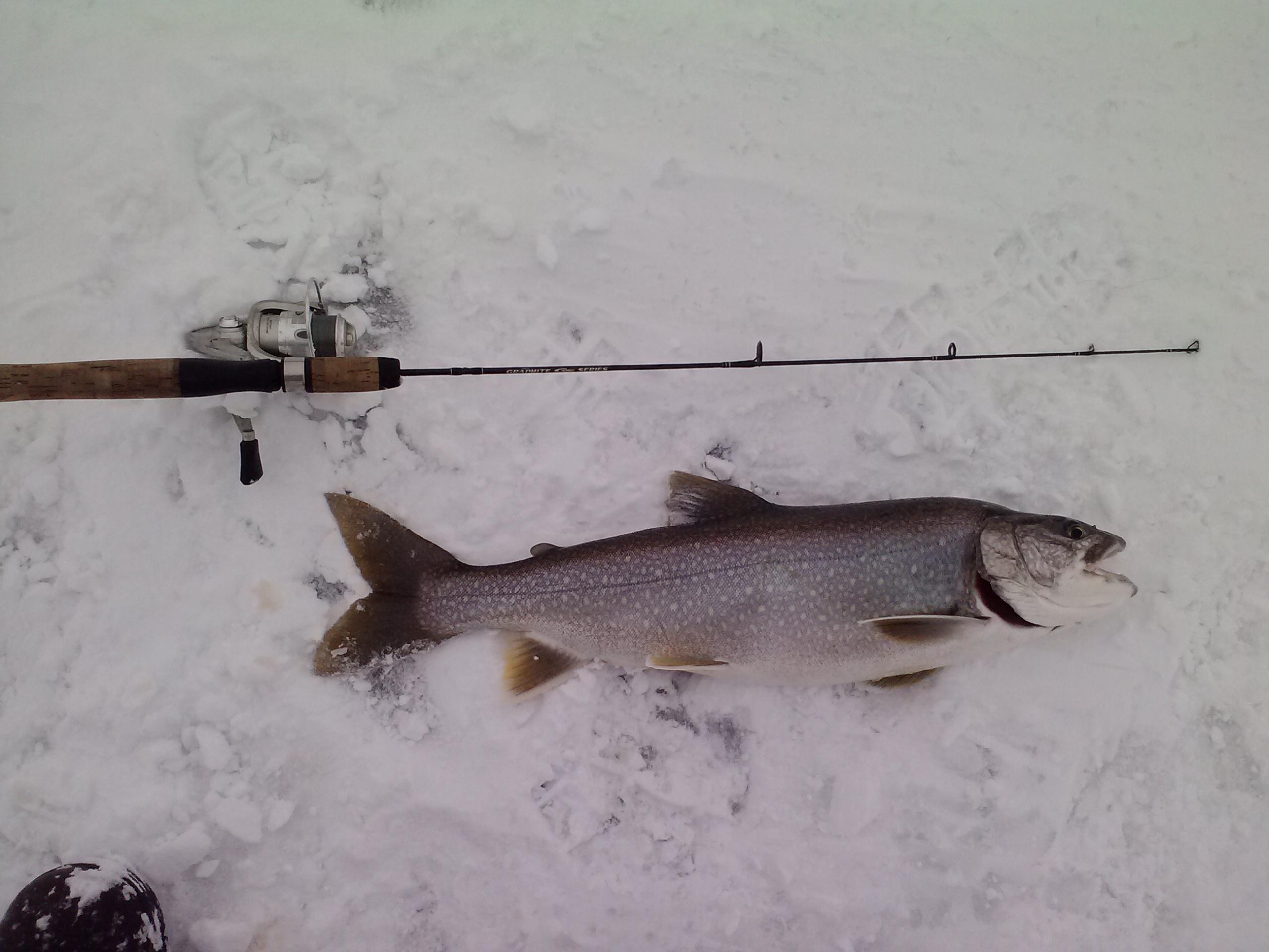 Oneida lake walleye charters finger lakes trout charters for Lake trout ice fishing